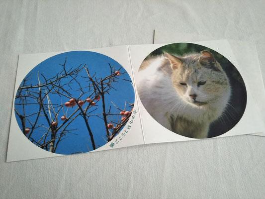 猫ごころと谷中の空③ 385円