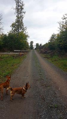 Camper Hunde im Wald