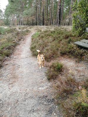 Camper mit Hund in Bispingen