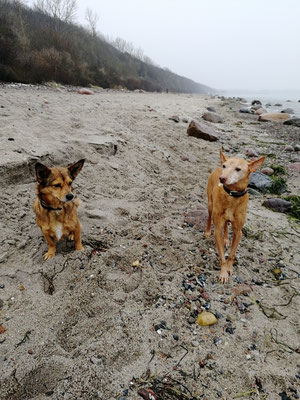 Camperhunde am Strand von Rerik