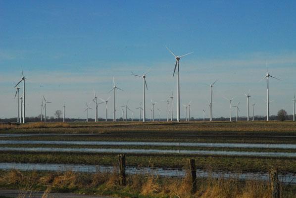 121 - Elbmarschgebiet mit Windpark im Hintergrund an der Elbe in Norddeutschland.