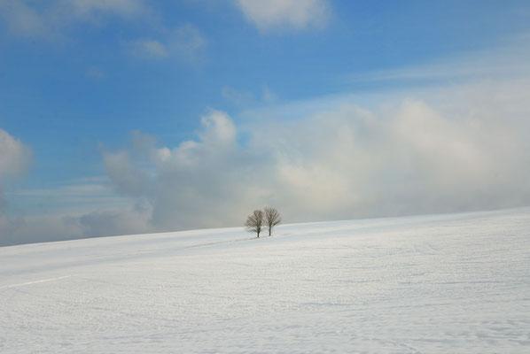 11- Winter, zwei Bäume, Landschaft
