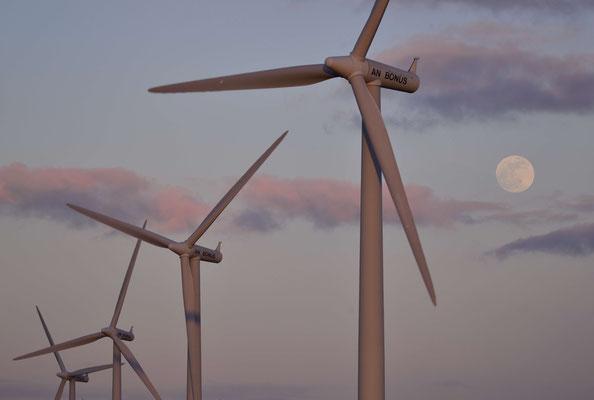 1- Windrad, Windkraftanlage, Windpark, Windkraft, Windgenerator, Windpark Oederquart, Niedersachsen, Deutschland
