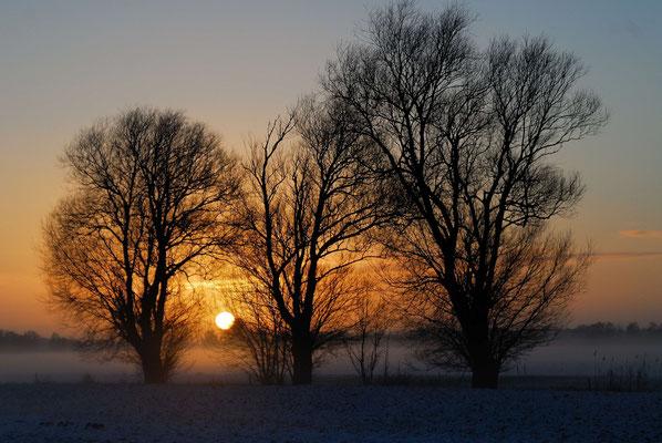 18- Bäume bei Sonnenaufgang im Winter, Schnee