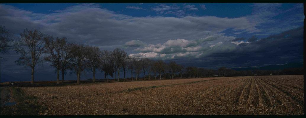 3- Feld und Allee im Herbst