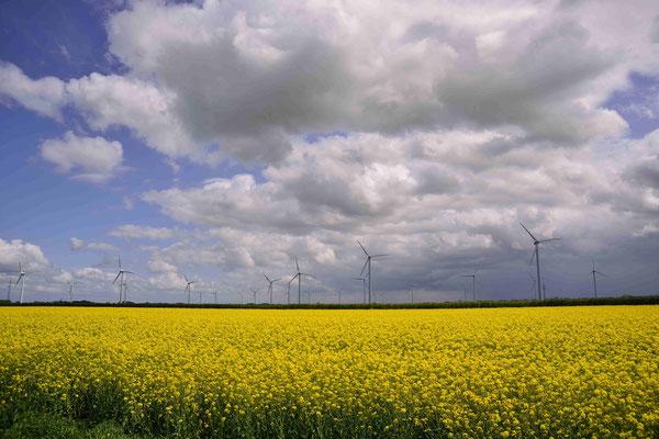 84 -  Windrad, Windkraftanlage, Windkraft, Windgenerator, Ökostrom,  Windpark Oederquart, AKW, Atomkraftwerk, Kernkraftwerk,