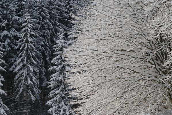 8- Winter, Baumkronen