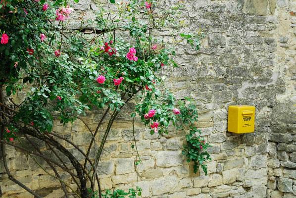 123- Kletterrose, rosa an Hauswand, Kroatien