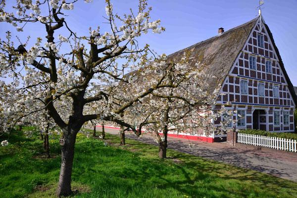 69-  Apfelblüte, Apfelbaum,  altes Haus, bei Hamburg, Altes Land