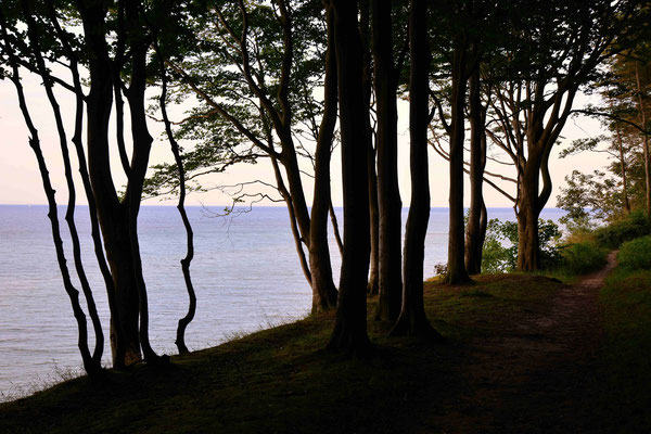 25- Bäume an Steilküste, Ostsee