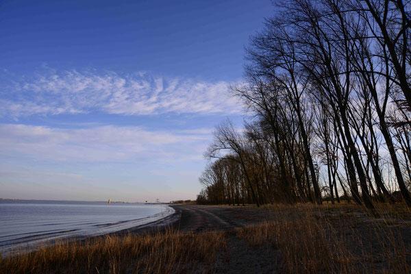 56- Elbe, Insel Krautsand, Strand, Bäume