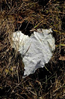 23- Müll in Wiese, Herzform