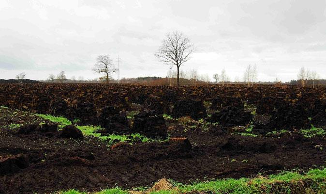 92- Torfgebiet, Torf, Torf gestochen, geschichtet
