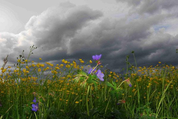 29- Sommerwiese mit düsteren Wolken