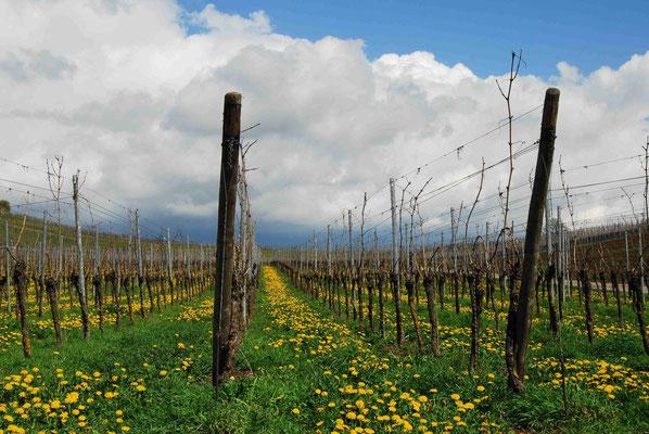 29- Weinbau, Wein