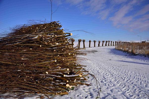 9- Winter, Kopfweiden, Gehölz, Äste, Winterschnitt