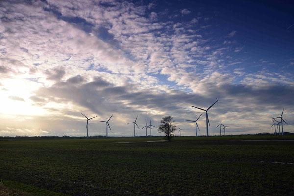 91 - Windpark Oederquart, Windrad, Windräder, Windkraftanlagen, Niedersachsen, Germany, Deutschland