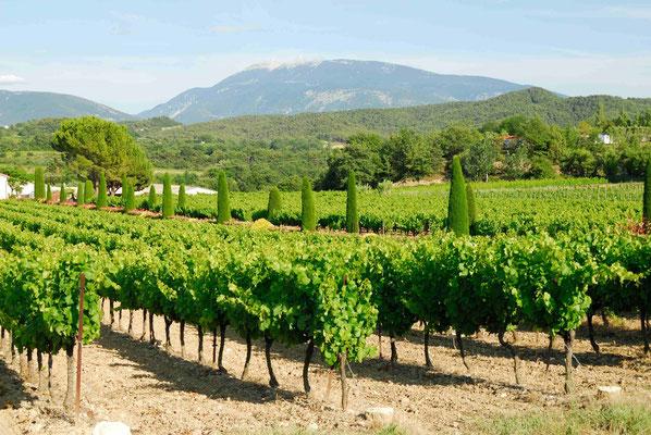 51- Weinbau, Wein, Frankreich