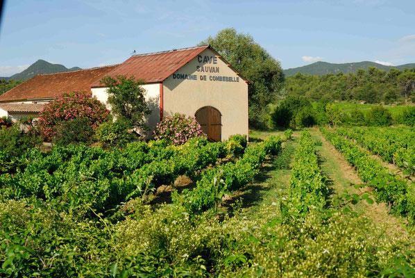 54- Weingut in Frankreich