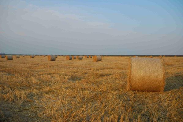 15- Strohballen, Ernte, Getreidefeld, Getreide