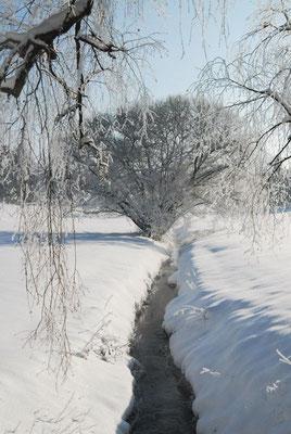 4- Winter, Landschaft mit Bach, alte Weide, verschneit
