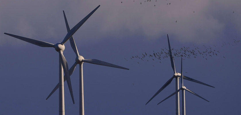 147 - Vogelschwarm, der an Windrädern vorbeifliegt - Problem der Schlagzahlen bei Zugvögeln.