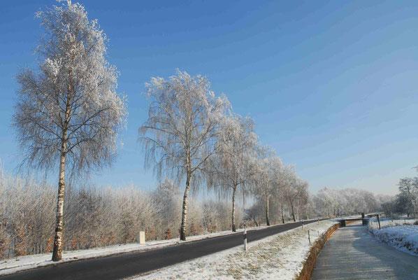 45- Winter, Straße, Bäume, Schnee