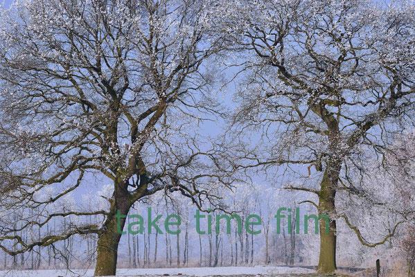61 - Zwei Bäume bei.