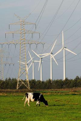 148 - Windräder in Norddeutschland mit Kuh auf der Weide im Vordergrund.