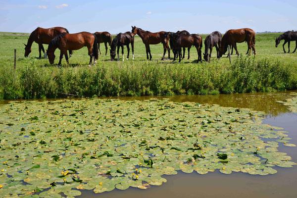 116 - Pferde