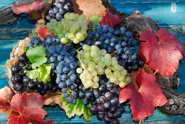45- Wein, Weintrauben, Arrangement, Stilleben