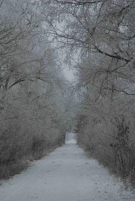 43- Winter, Schnee, Weg