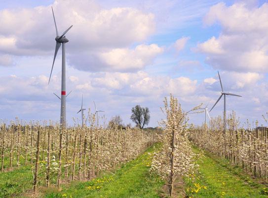 27 - Windrad, Windkraftanlage, Windkraft, Windgenerator, Ökostrom, Apfelplantage, Apfelblüte, Windpark Oederquart