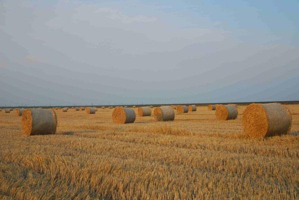 16- Strohballen, Ernte, Getreidefeld, Getreide