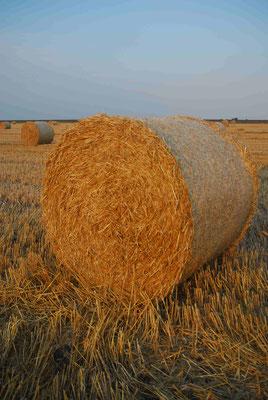 19- Strohballen, Ernte, Getreidefeld, Getreide