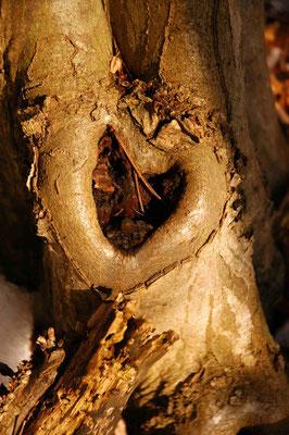 8- Herz im Baum