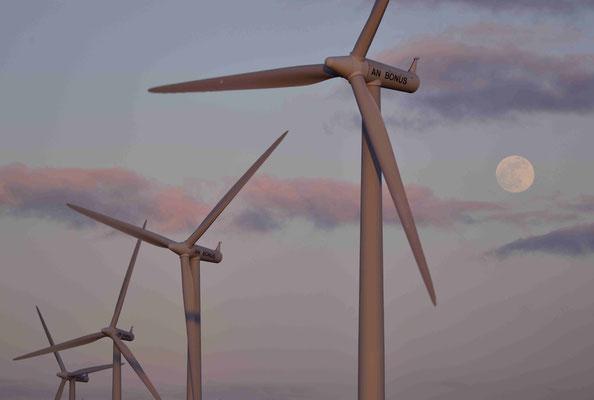 83 - Windpark Oederquart, Windrad, Windräder, Windkraftanlagen, Niedersachsen, Germany, Deutschland