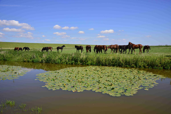 117 - Pferde