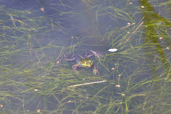 124 - Frosch in action.