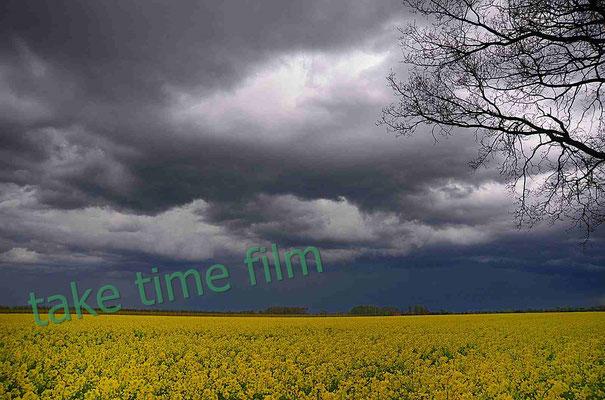 53 - Rapsfeld mit dramatischem Himmel
