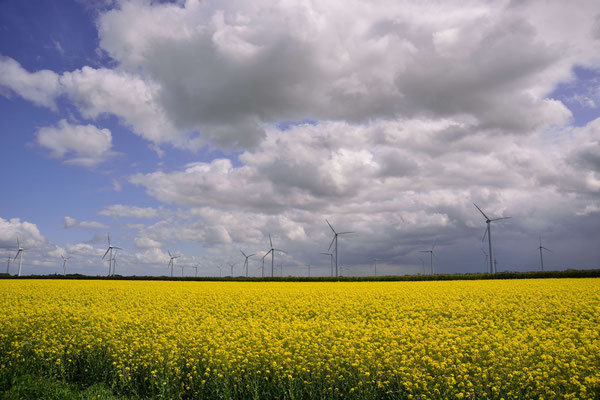 13-  Windrad, Windkraftanlage, Windpark, Windkraft, Windgenerator, Windpark Oederquart, Niedersachsen, Ökostrom, Raps