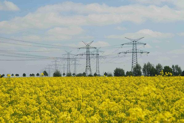 75- Rapsfeld mit Strommasten
