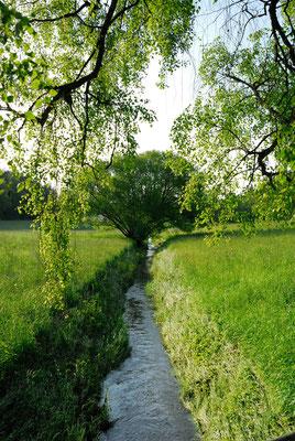 9- Bach mit alter Weide, Sommer