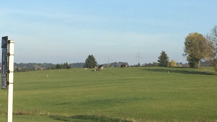 Oy-Mittelberg-ホームからの眺め-