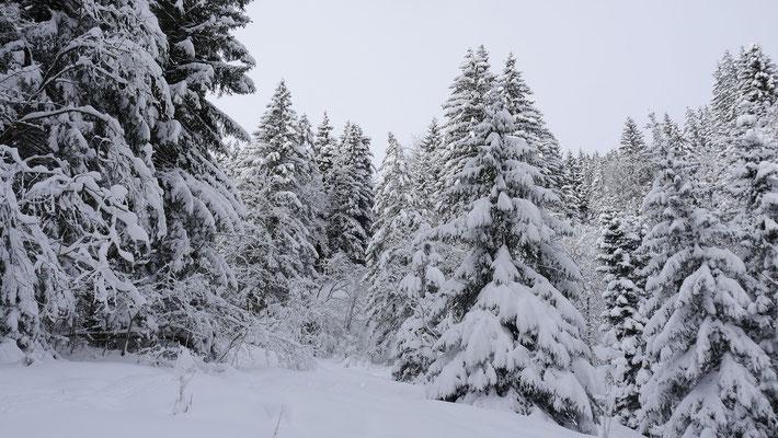 Herrlich verschneite Wälder wie wir sie eigentlich im Hochwinter lieben