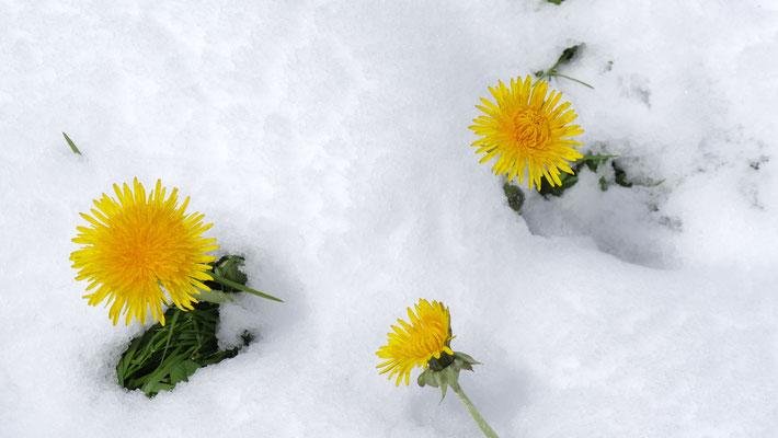 der Frühling kann warten