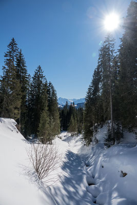 Interessantes Wandergelände führt uns durch den Feldmooswald auf das Riedmattstöckli