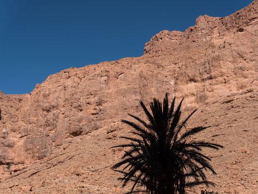 Zurück in der Todra Gorge müssen wir feststellen; es ist immer noch zu heiss, um an der Sonnseite zu klettern, auch wenn die Wände dort oben geniale Klettereien aufweisen