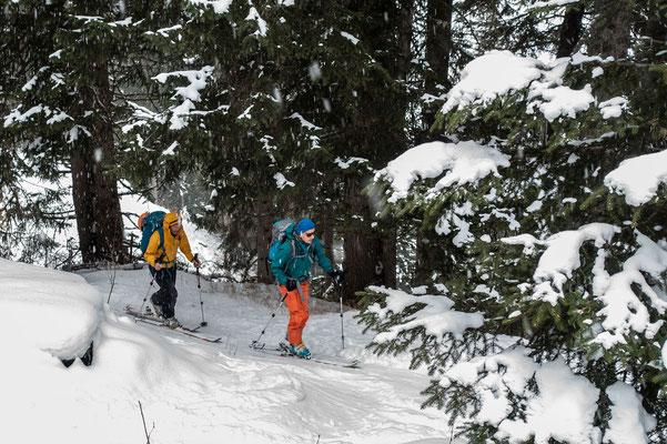 Tags darauf gibt es Powdernachschub, hier im Aufstieg durch den Peilerwald Richtung Ampervreilhorn