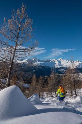 Lustige Schneekegel haben sich um die Lärchenstämme gebildet, im Hintergrund Bietschhorn und Aletschhorn